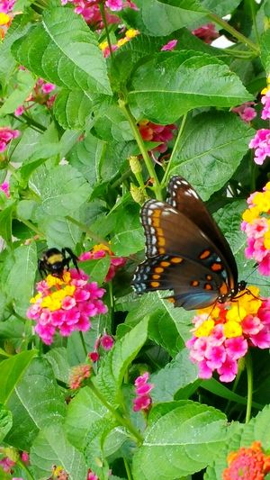 Flower Freshness Leaf Plant Growth Insect Wildlife Petal Close-up Butterfly - Insect Beauty In Nature Nature Butterfly Bee
