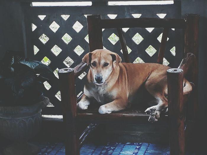 Doggy, newbie Pets