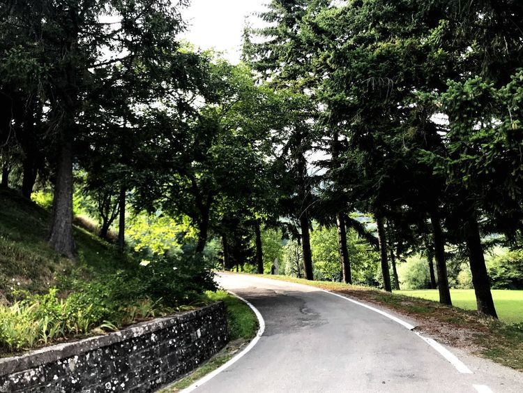Where we go now? 🏕 Tree Plant Road Direction Transportation The Way Forward Growth Nature No People Green Color Tranquility Beauty In Nature Day Tranquil Scene Outdoors Empty Road City Curve Scenics - Nature Sunlight