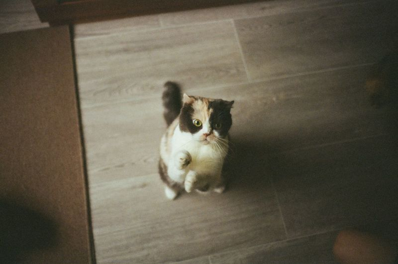 Film Animal Themes Day Domestic Animals Domestic Cat Feline Film Photography Filmisnotdead Full Length Indoors  Mammal No People One Animal Pets Sitting Pet Portraits