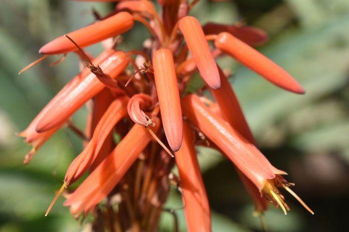 EyeEm Selects Flower Beauty In Nature Ecuador Ecuador Nature Photography Quito Ecuador Bright Colors