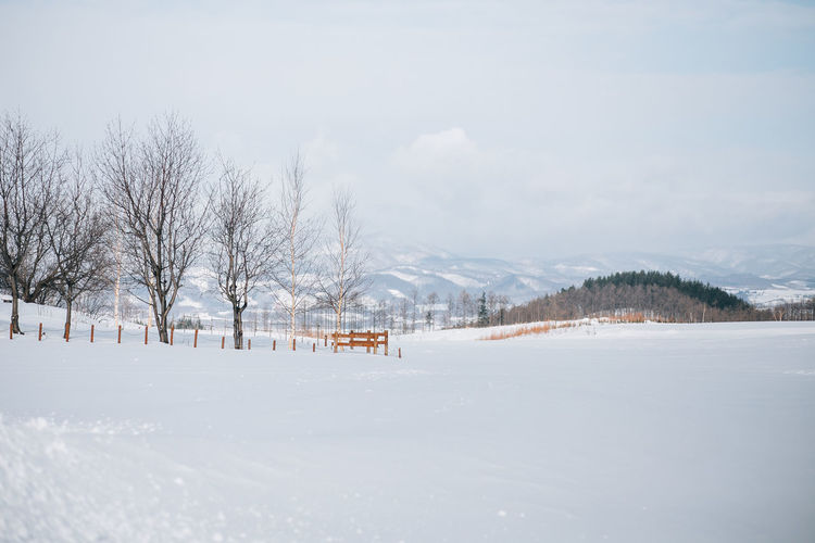 Winter in Nakafurano Hokkaido Japan Nakafurano Bare Tree Beauty In Nature Cold Temperature Landscape Nature No People Plant Scenics - Nature Snow Snowcapped Mountain Snowing Tranquil Scene Tranquility Tree White Color Winter