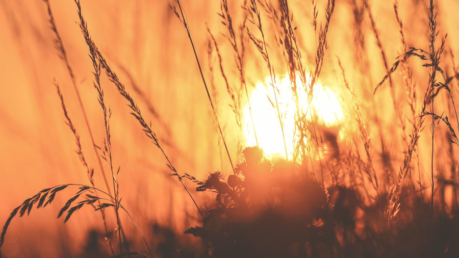 EyeEm Best Shots EyeEm Nature Lover Agriculture Beauty In Nature Bright Close-up Crop  Growth Land Nature No People Orange Color Outdoors Plant Scenics - Nature Selective Focus Silhouette Sky Stalk Sun Sunlight Sunset Timothy Grass Tranquil Scene Tranquility