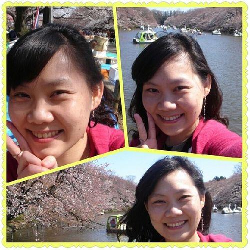 Inokashira Sakura Happiness 井之頭公園。。。