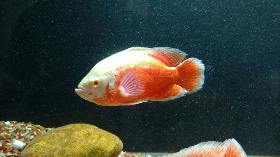 Fish Swimming In Tank At Aquarium