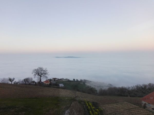 a sea of clouds EyeEm Selects A Sea Of Clouds   Landscape Cloud - Sky Water Outdoors Sunset No People Sky Tree Horizon Over Water Tranquility Sea Rural Scene Nature Beauty In Nature Fog Day Scenics Beach Cold Temperature Grass