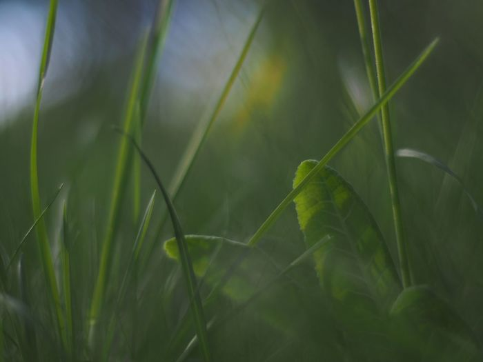 Grass Blades Green Gren Grass Green Leaves Green Plant Greengrass Green Leaf Natures Diversities The Essence Of Summer Fine Art Photography
