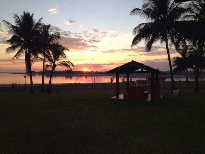 Palm Tree Sea