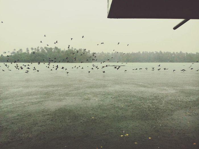 Taking Photos The BIRDS!! Finding Food Hope For Food a rainy day The Lake>>>> Ashtamudilake Kollam