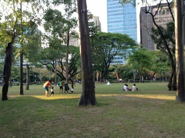 Taken at Ayala Triangle Gardens, Makati City. Taking Photos Hanging Out Enjoying Life Nature Photography Mobile Photography Eyeem Philippines The Moment - 2015 EyeEm Awards