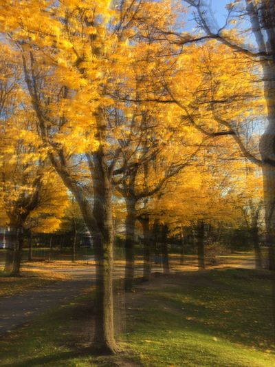 PHOTOIMPRESSIONISM Sfumato Effect Tree Autumn Nature Beauty In Nature No People Scenics Outdoors Tranquility Tranquil Scene End Of Day Sunlight Orange Color Bright Light Atumn Colors