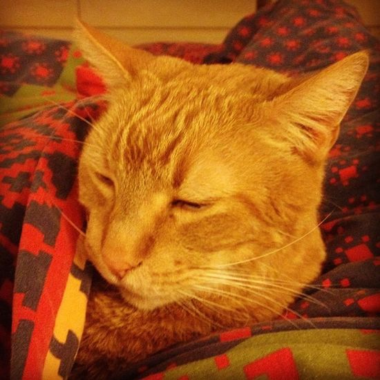 Time for a cat nap. #iphoneography #jomo #cat #fatboy Cat IPhoneography Sleep Fatboy Nap Jomo