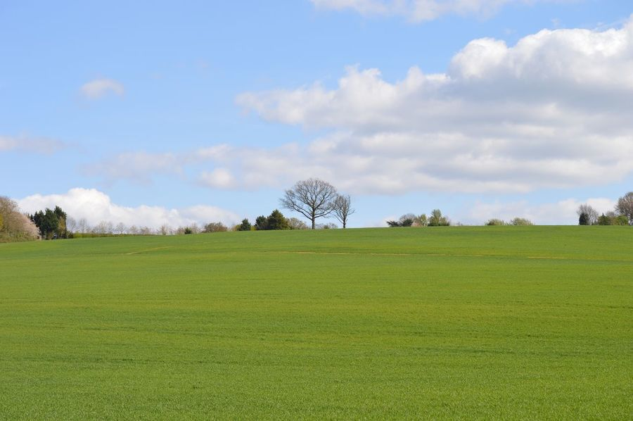 Unedited EyeEmNewHere Freshness Outdoors Day Beauty In Nature eNo People Landscape Field Tranquility Tranquil Scene Sky Grass Green Color Cloud - Sky Bare Tree Tree Scenics Agriculture Beauty In Nature Nature England Potten End