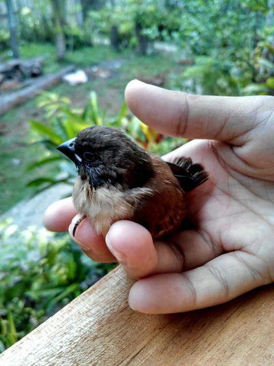 before going to work i found this little bird. . Bird Photography Autofocus Nofilter