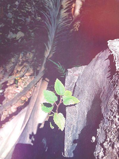 Latepost ForestPark Edit Junkie Morning Light