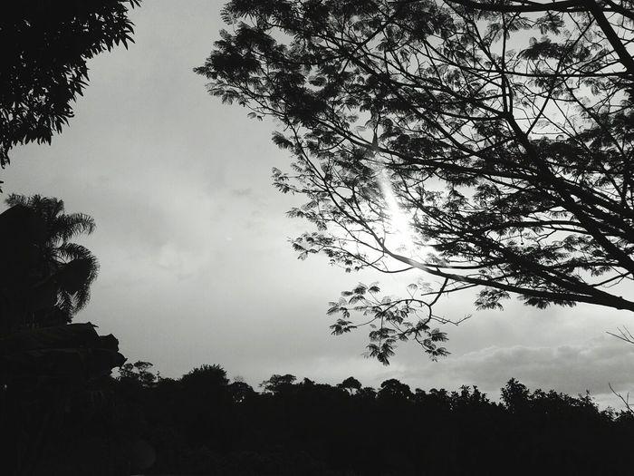 Leaves🌿 Cloud