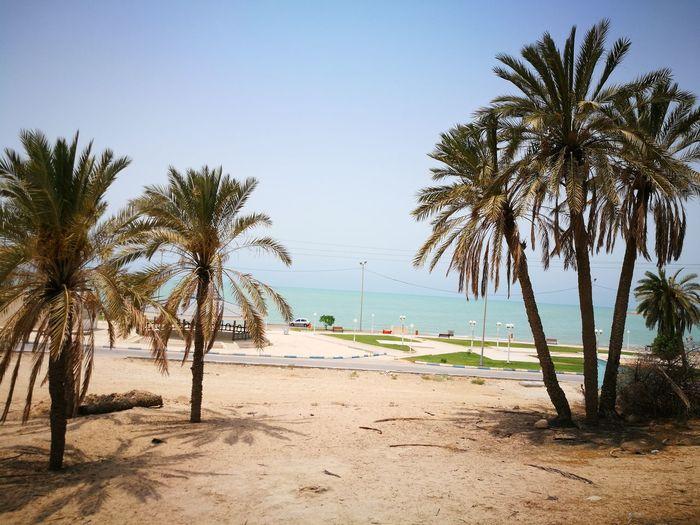 Siniz Beach Sea Beach Palm Tree Sand Nature Outdoors Sky Beauty In Nature سینیز بندر امام حسن Emamhasan Port Persian Gulf Siniz