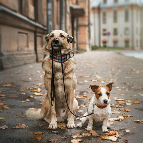 Portrait of dogs