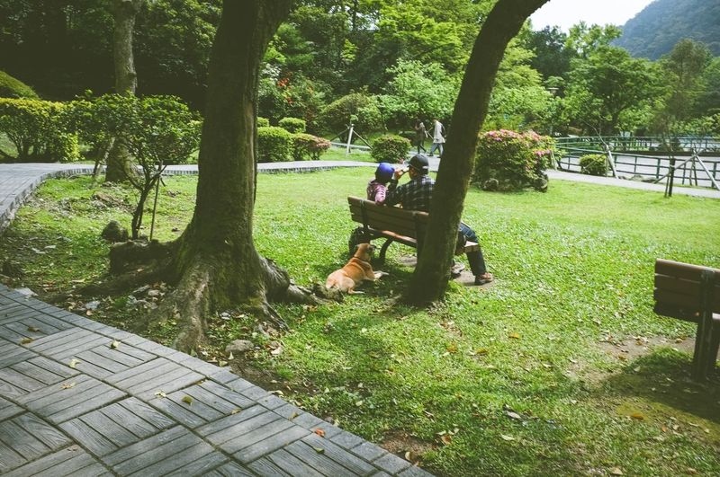 Real People Tree Park - Man Made Space Sitting Growth Leisure Activity Lifestyles Nature Bench Day Green Color Beauty In Nature Men Tree Trunk Grass Mammal Outdoors Dog Taiwan Ali Mountain