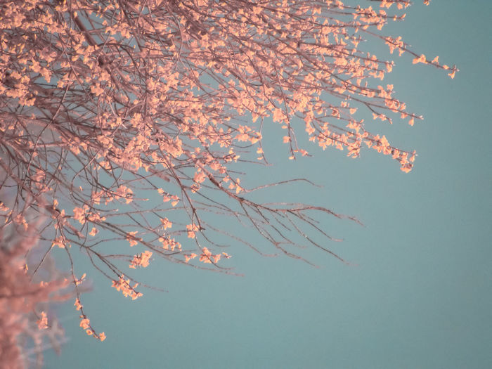 warm blossom Blossom Orange Color Turquoise Colored Turquoise Sky Branches And Sky Pastel Power Surreal Backgrounds Flower Close-up Branch Flower Tree Pink Twig Spring Bare Tree Change Tree Trunk Growing