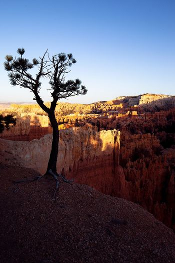 Lonely pine Light And Shadow Setting Sun And Tree EyeEm United States Of America Bryce Canyon Sky Tranquility Plant Tranquil Scene Tree Nature Environment Clear Sky Outdoors No People Copy Space