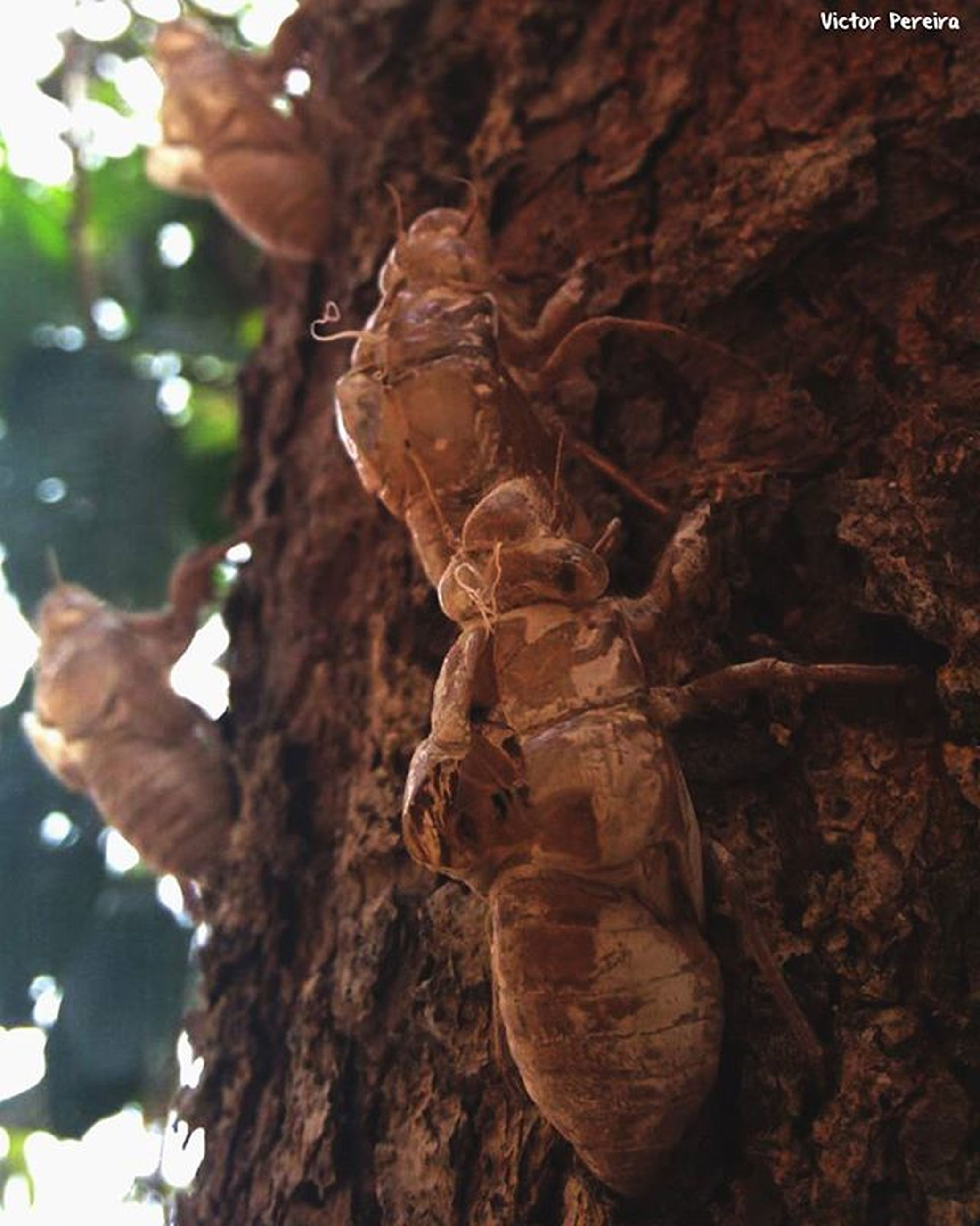 close-up, animal themes, animals in the wild, focus on foreground, wildlife, one animal, insect, nature, tree, textured, tree trunk, day, natural pattern, outdoors, brown, branch, selective focus, part of, no people, leaf