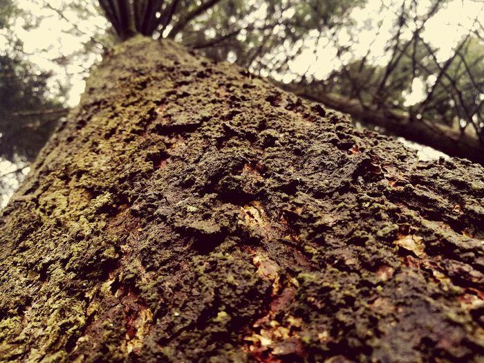 Baum 🌳🌲