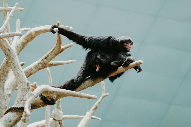 Portrait Of A Monkey