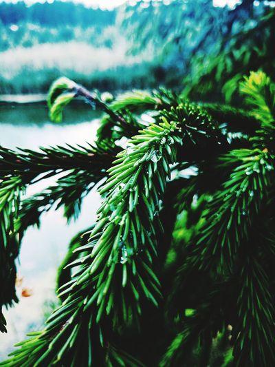 Green Green Color First Eyeem Photo
