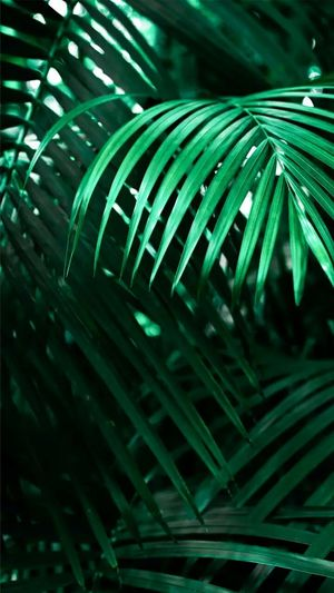 In the Jungle Green Color Palm Leaf Leaf No People Palm Tree Frond Night Plant Close-up Fern Nature Outdoors Tree Beauty In Nature Nature Photography Beauty In Nature