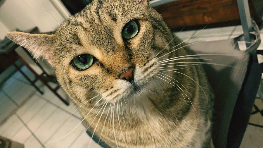Big Cat Mammal