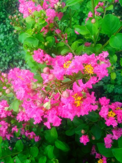 flower Crape