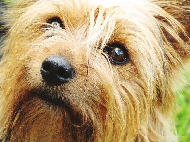 Dog Pets Animal Themes One Animal Domestic Animals Animal Hair Mammal Animal Head  No People Portrait Day Outdoors Nature