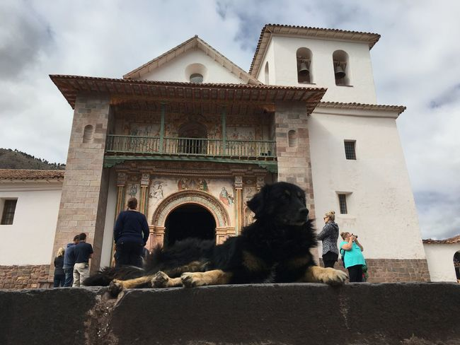 A dog rests while tourists take photos at San Pedro Apóstal de Andahuaylillas Travel Cusco Traveling IPhoneography Peru On A Holiday Streetphotography Architecture Animals Square