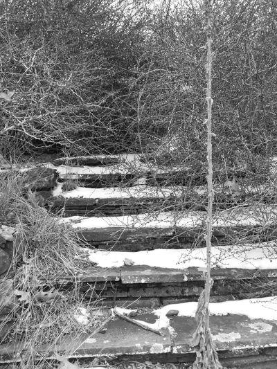 Former Buck Hills Inn, PA Nature On Your Doorstep Northeast Pennsylvania Steps