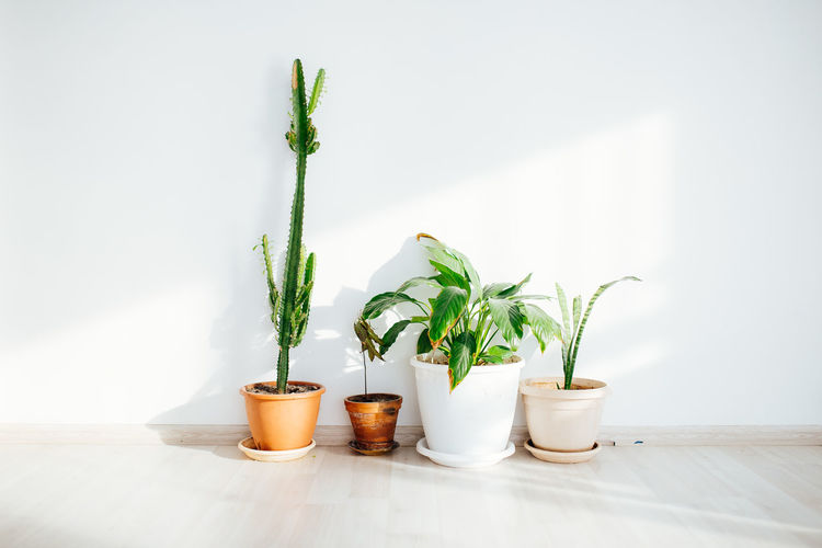 Potted plants in front of a white wall