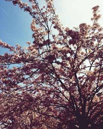 Spring Natureinthecity Beautyineverydaythings First Eyeem Photo