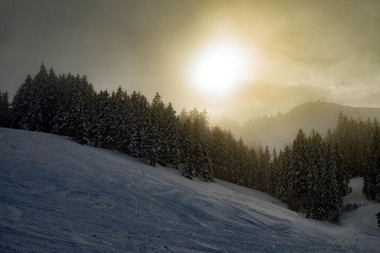 Snow Light Tree