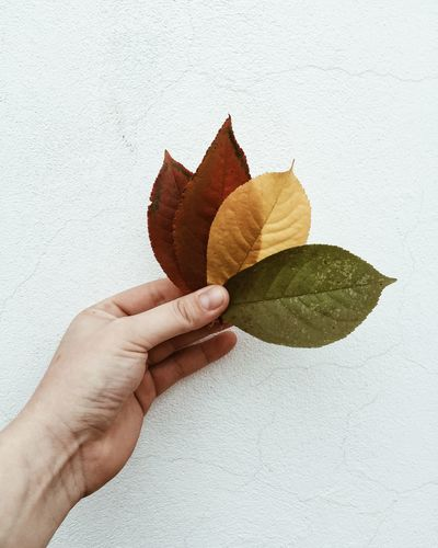 Cropped hand of woman holding leaves against wall