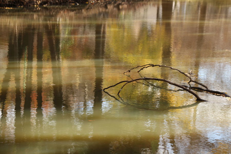Pond Autumn Autumn colors Nature Photography Japan Shonan Waterfront