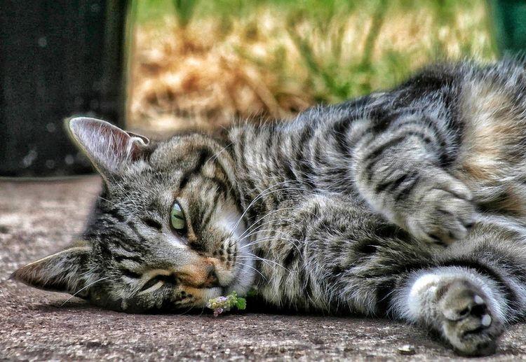 Catnip Pets
