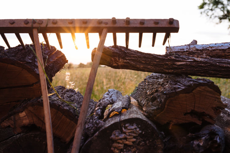 Evening Field Sun Sunlight Sunset Wood