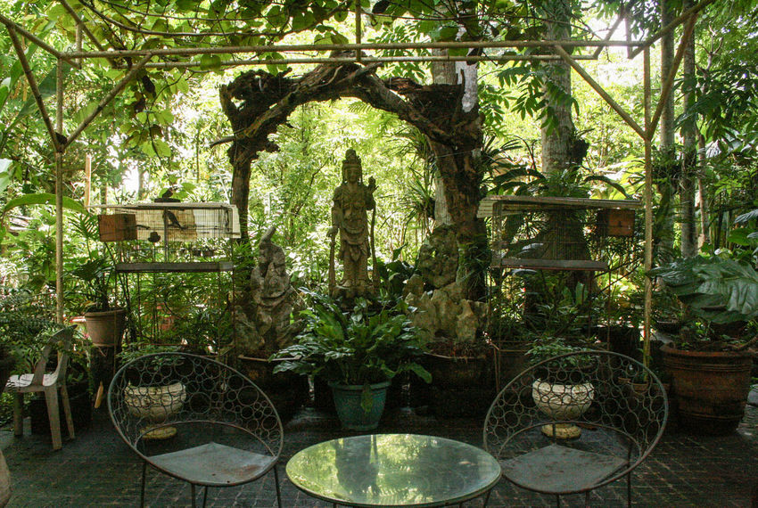 Backyard Branch Chair Day Green Color Group Of Objects Growth Lawn No People Outdoors Philippines Plant Solitude Table Tranquil Scene Tranquility Tree Tree Trunk