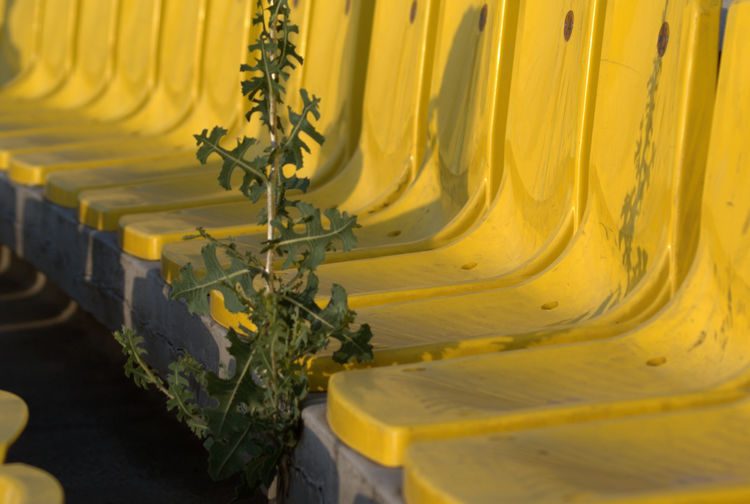 View of a plant growing from crack in concrete in a stadium seating area. Paint The Town Yellow Stadium Close-up Day In A Row No People Row Seat Seating Yellow Yellow Color