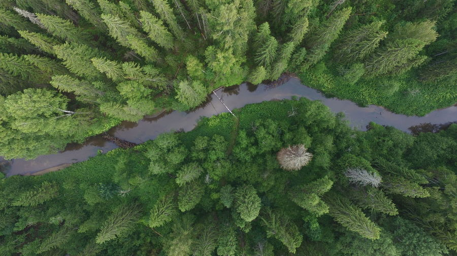 flying over forest of Russia Beauty In Nature Day Elevated View Green Green Color Growing Growth Idyllic Landscape Lush Foliage Nature No People Non-urban Scene Outdoors Plant Remote Scenics Sky Tranquil Scene Tranquility Tree A Bird's Eye View Flying High Lost In The Landscape