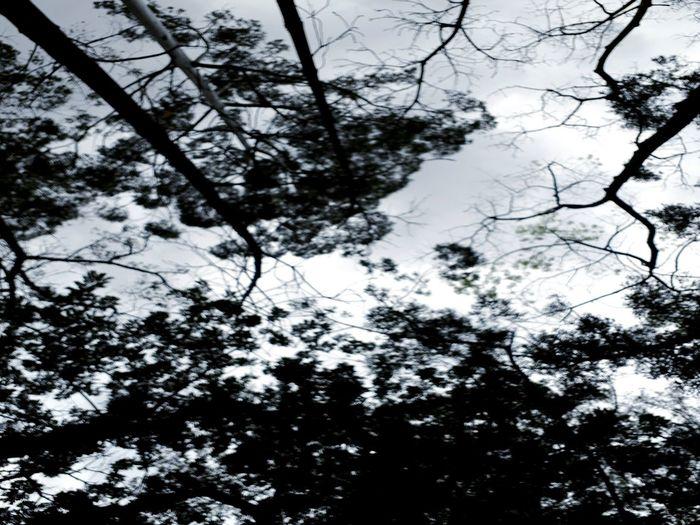 Beauty In Nature Forest Nature Sao Paulo - Brazil árvores, Natureza, Paisagens Naturais, Primavera