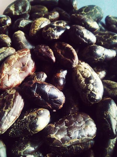 Cacao ☕🌳🌰