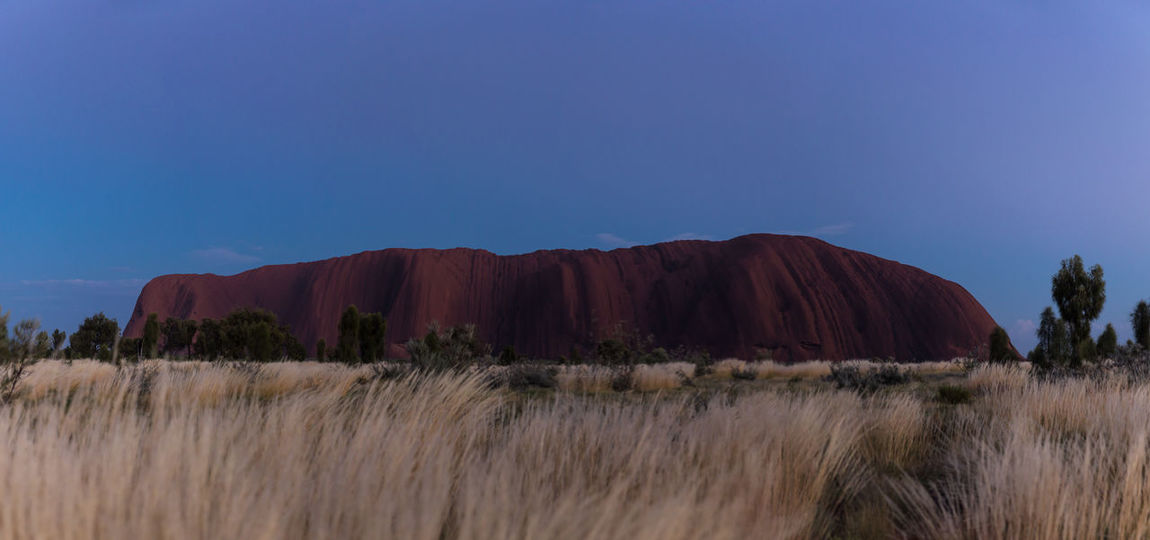 Ayers Rock (Uluru, Australia) in the morning light with blue sky. Right before sunrise during blue hour. Sadly no clouds this morning. Australia Australian Landscape Ayers Rock Blue Hour EyeEm Nature Lover Nature Photography Rock Formation Beauty In Nature Blue Sky Clear Sky Grass Landscape Mountain Nature Nature_collection No People Outdoors Rock - Object Scenics Tranquil Scene Tranquility Trees And Bushes