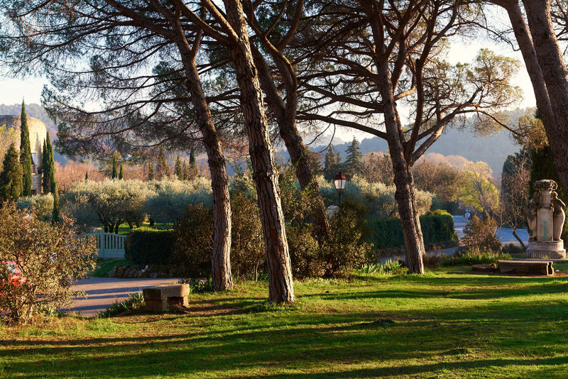 Park of Lourmarin. Provence-Alpes-Cote d'Azur. France Autumn Beauty In Nature Europe Famous Place France Garden Green Grass Landscape Lourmarin Luberon Nature No People Nobody Outdoors Park - Man Made Space Rustic Scenery Sunlight Sunlight Tranquility Tree Trees Trunk Tree Vaucluse Village