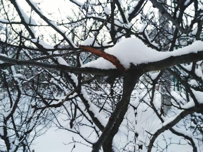 Tree Bare Tree Winter Cold Temperature Nature Snow Sky Day Beauty In Nature No People Branch Low Angle View Outdoors